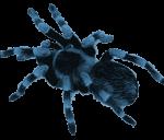 b_spider_logo